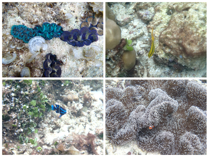Pretty corrals and colorful fishes in knee-deep water. Nemo everywhere! :D